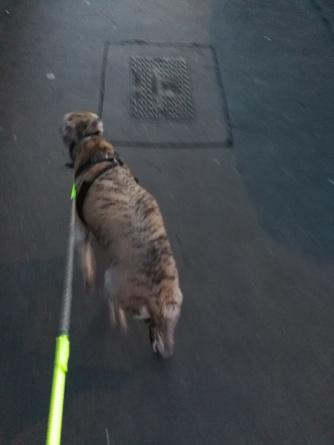 Tigger running